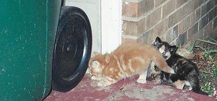 Kittens at the wheelie bin