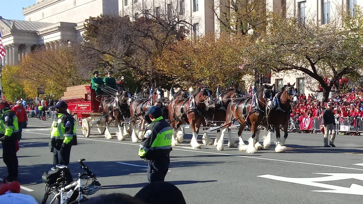 Some famous beer horses