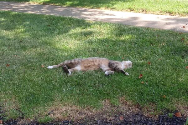 A neighborhood cat, sleeping in the sun