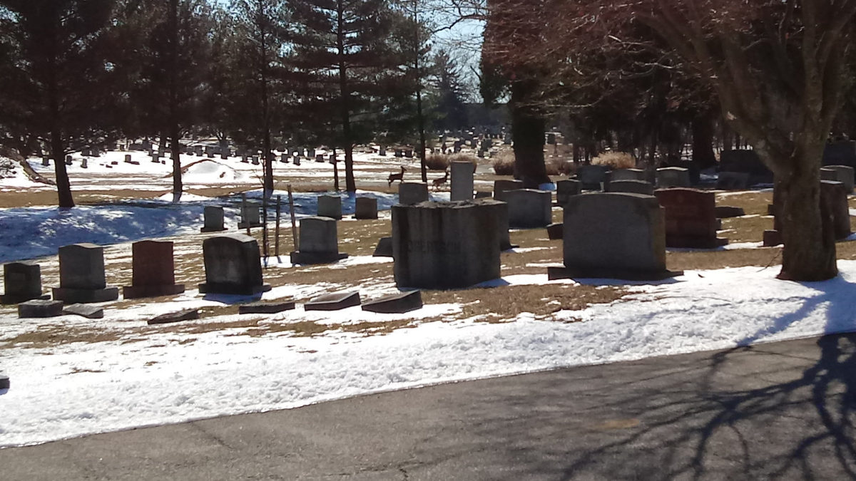 Deer in the distance among the graves