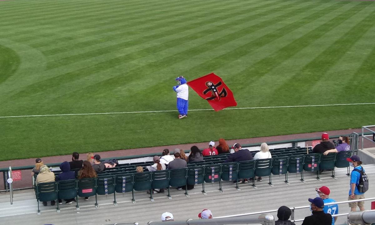 Rascal with the Senators flag