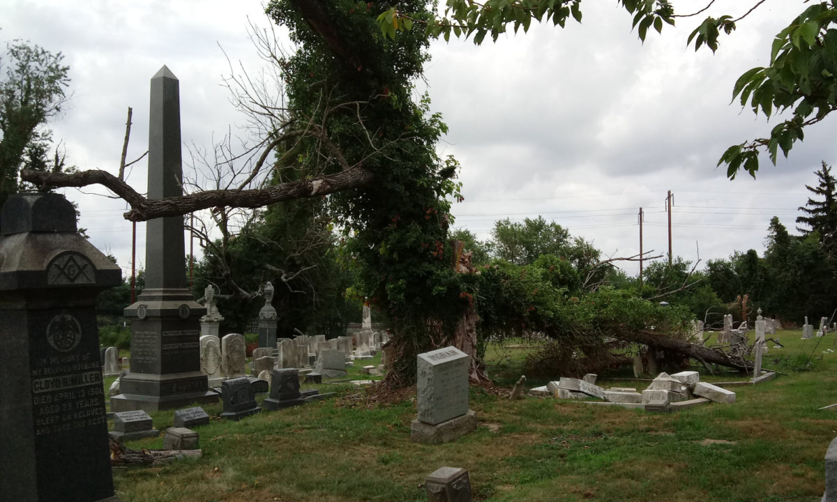 A tree branch has collapsed from a vine-covered tree onto headstones, some of them fallen and displaced